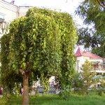 Приморская площадь Бердянска утопает в зелени